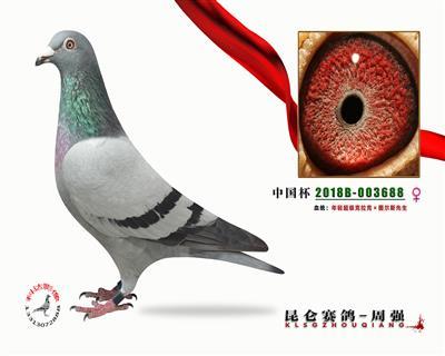 中国杯 年轻超级克拉克