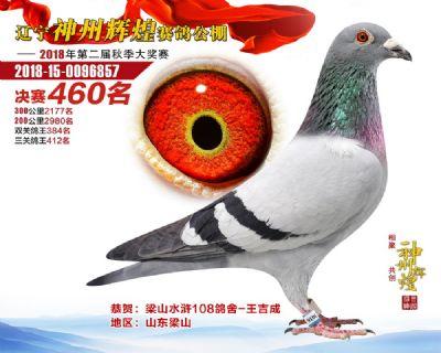 2018年辽宁神州辉煌公棚决赛460名