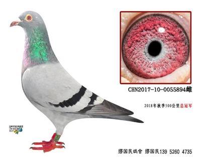 杨龚多拉斯894