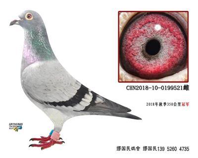 杨龚多拉斯521