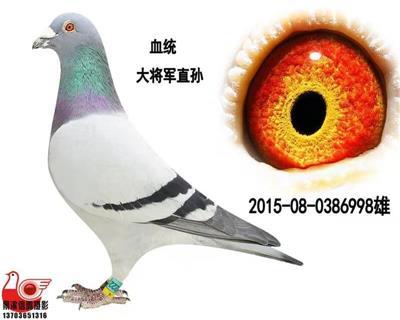 【大将军直孙】998