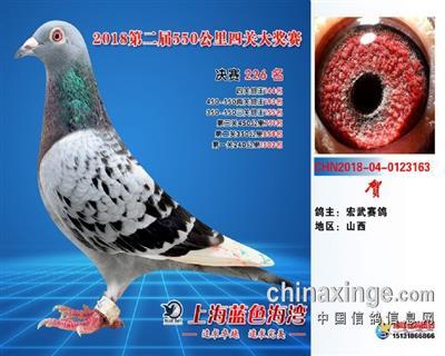 上海蓝色海湾国际赛鸽公棚决赛226名