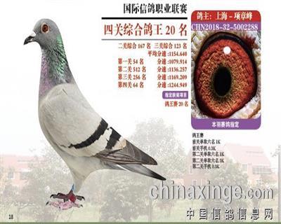 灵峰四关鸽王20名