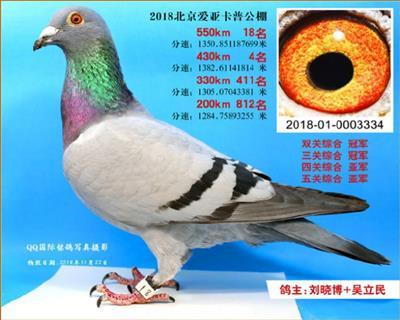 18年北京爱亚卡普三关鸽王总冠军