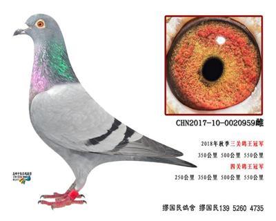 杨龚多拉斯959