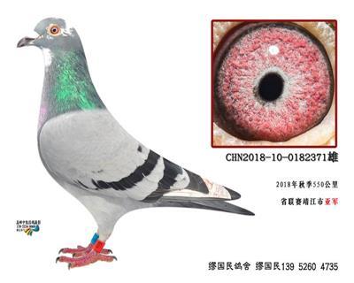杨龚多拉斯371