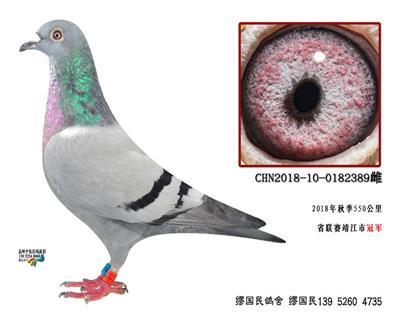 杨龚多拉斯389