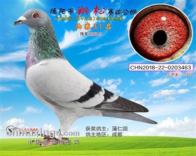 翔松 31