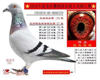 大连龙兴赛鸽俱乐部五关综合120名