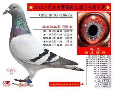 大连龙兴赛鸽俱乐部五关综合286名