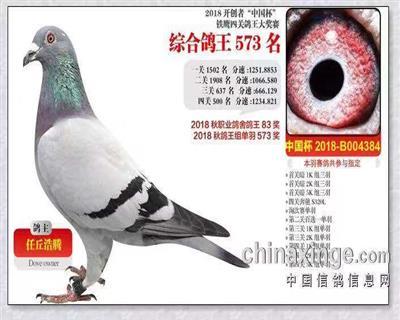 铁鹰四关鸽王综合573名
