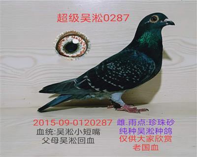 超级吴淞0287