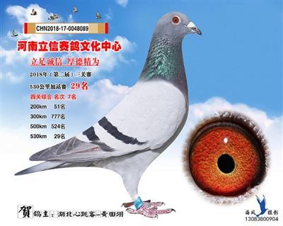 河南立信赛鸽文化中心