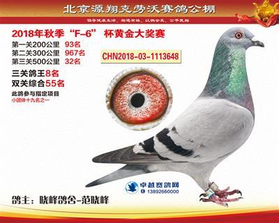 北京源翔克劳沃决赛32名,三关鸽王