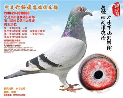 宁夏开拓者赛鸽俱乐部四关综合鸽王