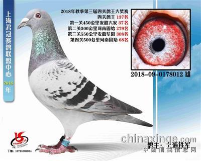 上海君冠赛鸽联盟中心四关综合137名