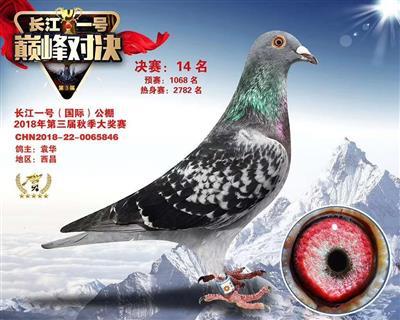 长江一号国际公棚决赛14名