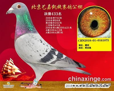 北京�嘉�P旋公棚433名