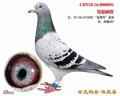 CHN18-16-0000091