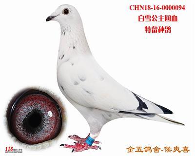 CHN18-16-0000094