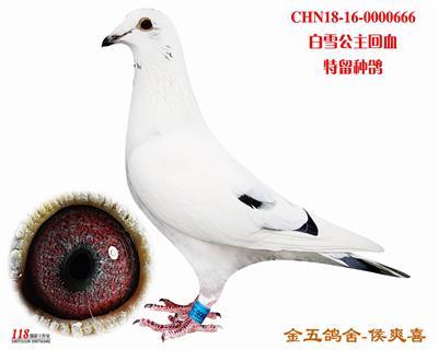 CHN18-16-0000666