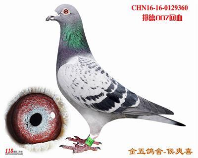 CHN16-16-0129360