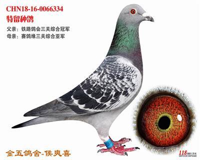 CHN18-16-0066334