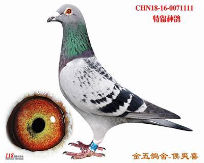 CHN18-16-0071111