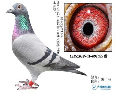2012年长辛店鸽会双关综合13名