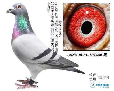 2013年长辛店鸽会三关综合12名