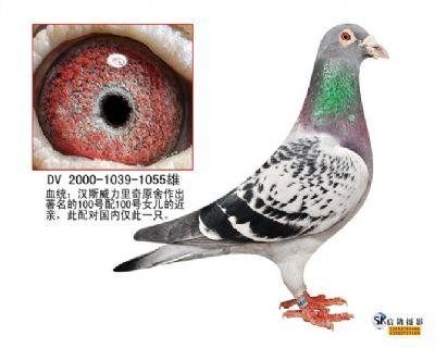 汉斯威力里奇原舍100号直子(1039)