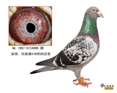詹森019近亲(大哥大695)