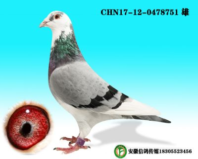 CHN17-12-0478751 雄