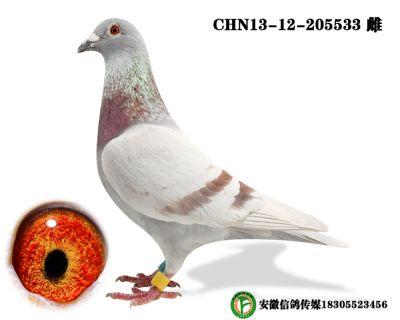 CHN13-12-205533 雌