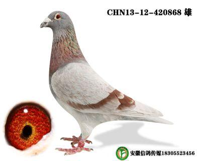 CHN13-12-420868 雄