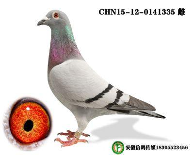 CHN15-12-0141335 雌
