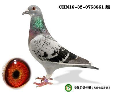 CHN16-32-0753861 雌