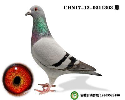 CHN17-12-0311303 雌