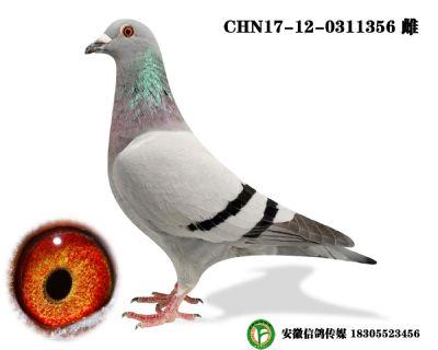 CHN17-12-0311356 雌y