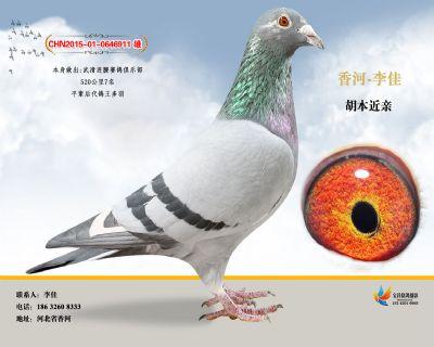 胡本6911