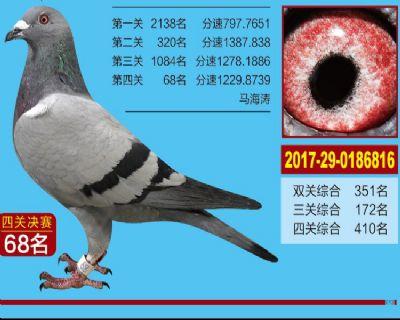 西安壹佰公棚决赛68