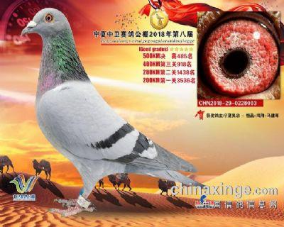 宁夏中卫公棚决赛485