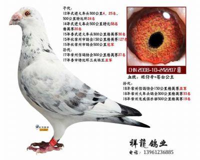 苍白骑士-雄鹰