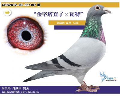 3 2012-03-857197 雄
