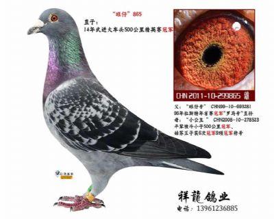 """""""旺仔""""直子865"""