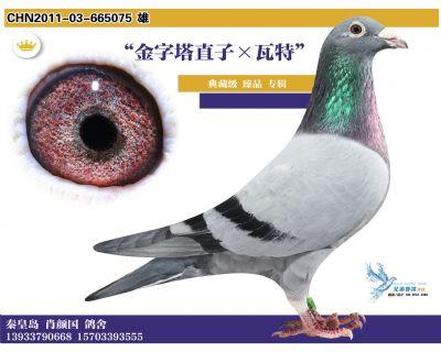 2 2011-03-665075 雄