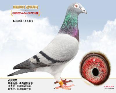 上海公棚冠军