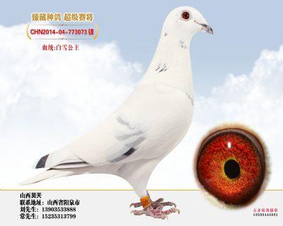 白雪孙子2014-04-773073