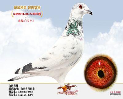 白雪孙女2014-04-773078