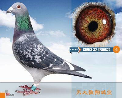 CHN13-32-1280822